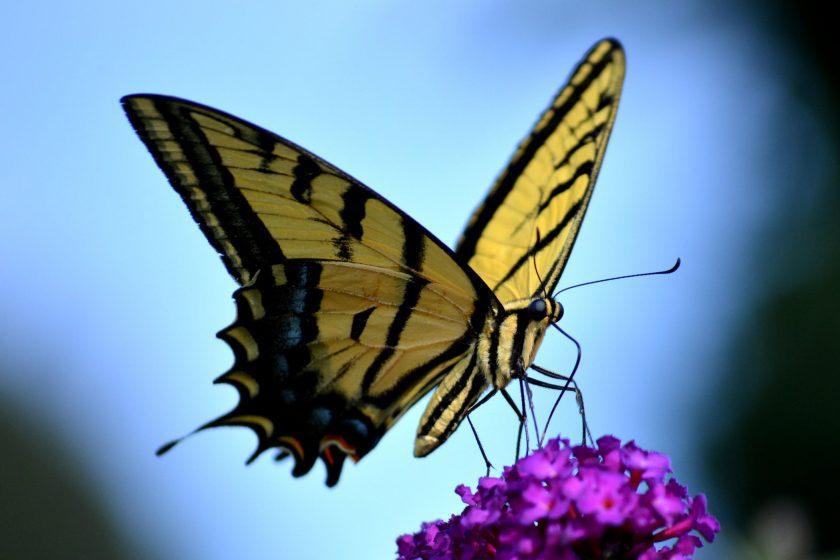 Fang de flyvende insekter